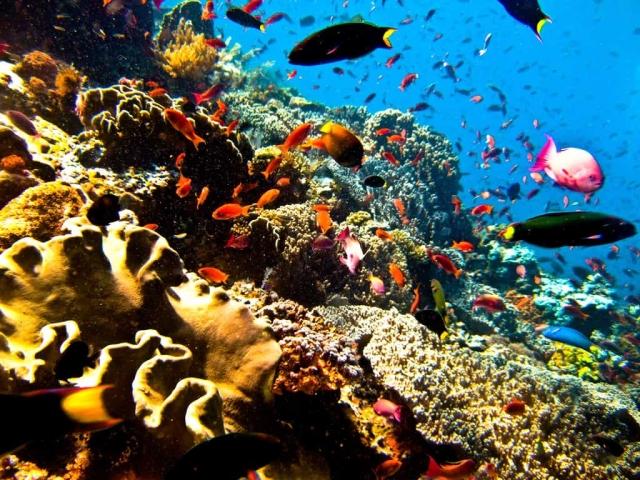 Faire de la plongée en indonésie