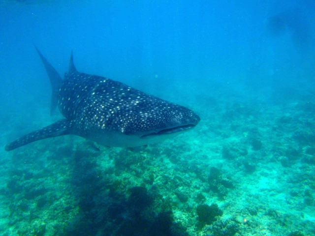 Quand plonger aux maldives