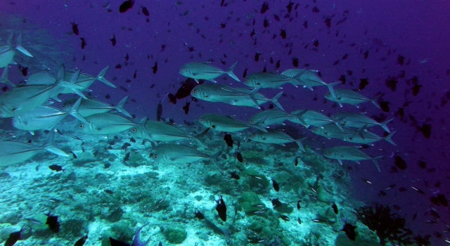 Busy Reef Maldives French Polynesia Reef