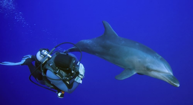 Dolphin and scuba diver side by side... Dauphin