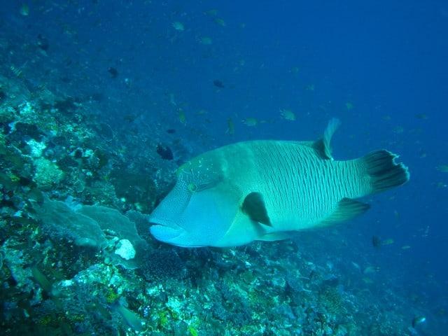 retouching photo of image underwater