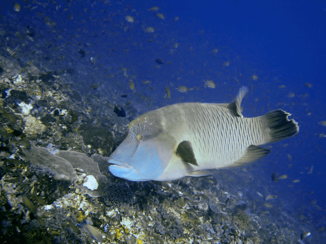 retouch photo of image underwater