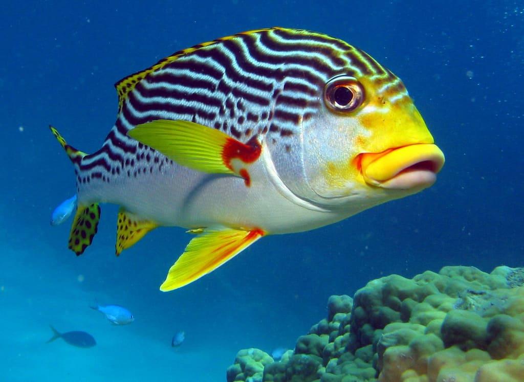 niveau 3 cours de plongee sous marine