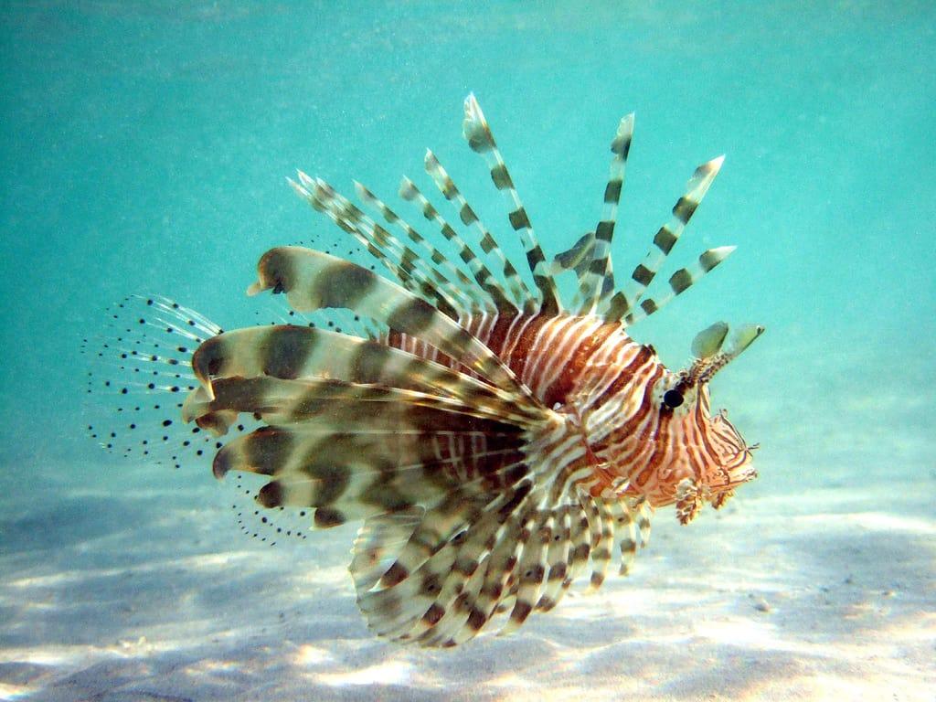 plongee dans les iles de komodo en indonesie