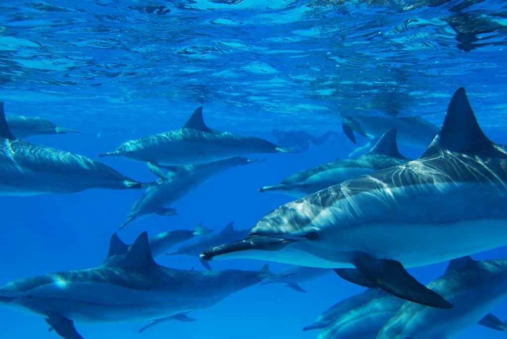 Spécialité Photographie numérique sous marine, Red Sea Red Sea Water World