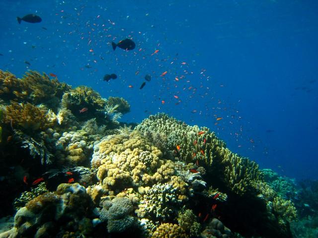 recif-corail-plongee-komodo