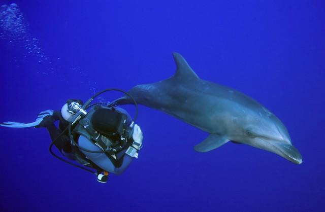 rangiroa plongée dauphin