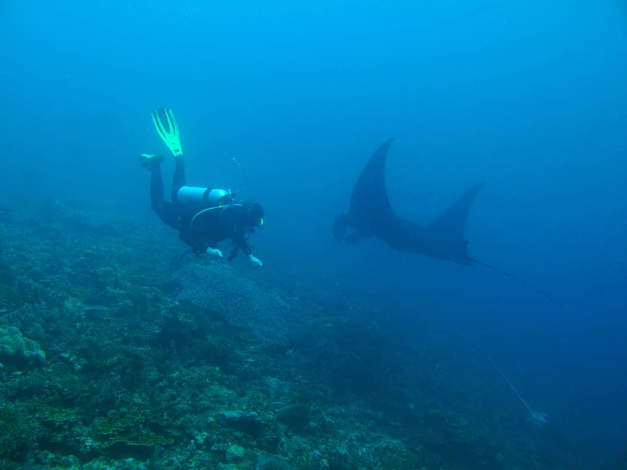 plongee sous marine a raja ampat