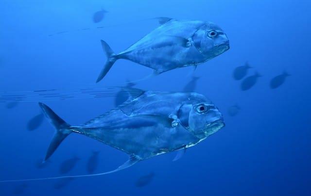 cours de plongee sous marine
