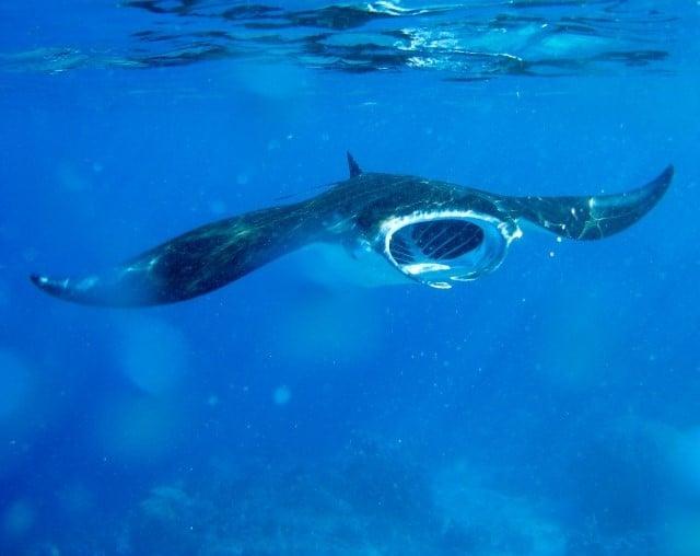 plongee sous marine komodo indonesie