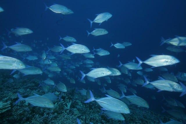 Photographie sous marine