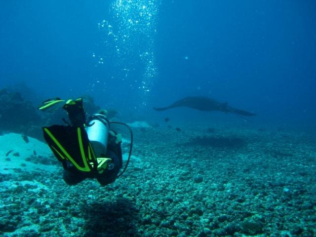 plongee sous marine a komodo en indonesie