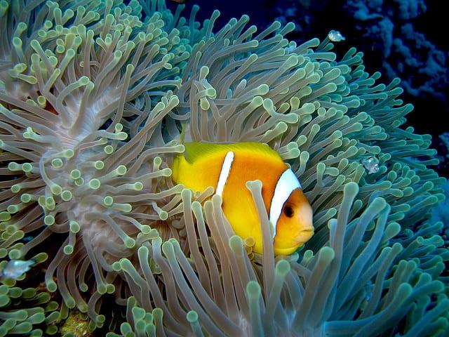 plongee sous marine mer rouge en egypte