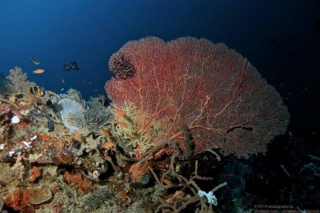 raja ampat corail