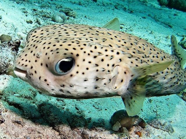 les plus beaux spots de plongee sous marine a koh lanta en thailande