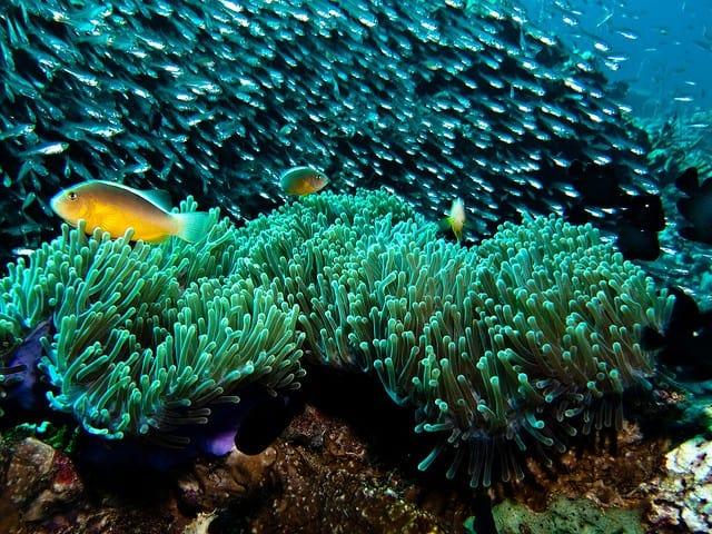 meilleurs sites de plongee a koh phi phi