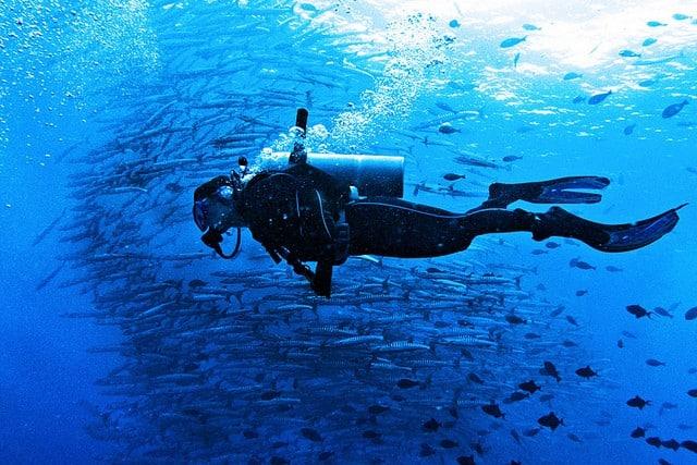 plongeur et bancs de poisson en Malaisie