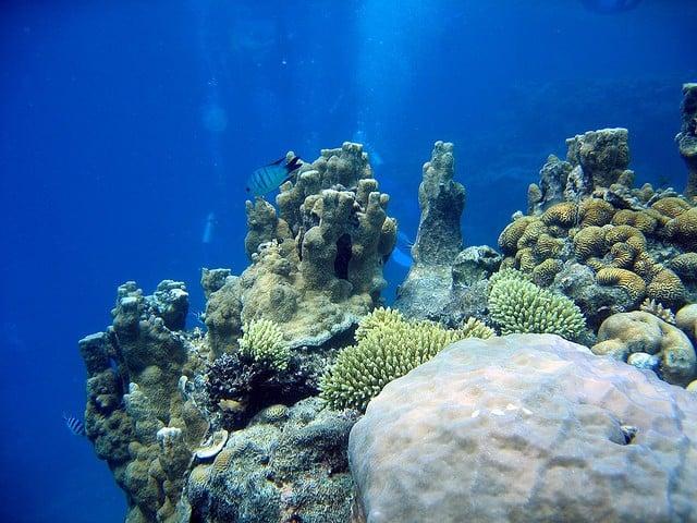 plongée grande barrière de corail australie