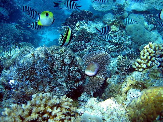 poissons de récif plongée australie