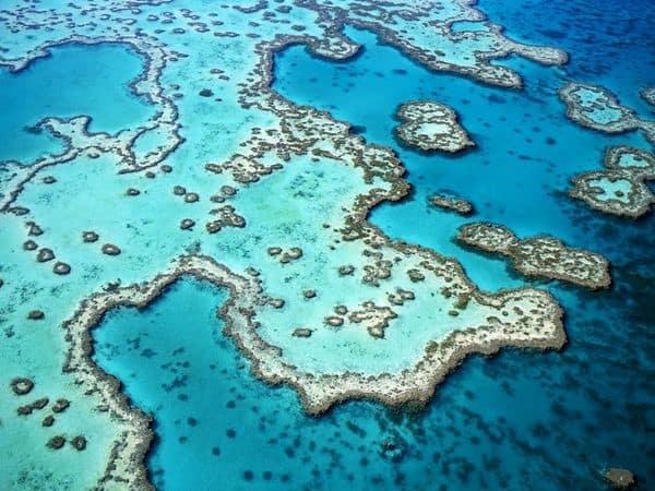 meilleures croisieres plongee grande barriere de corail