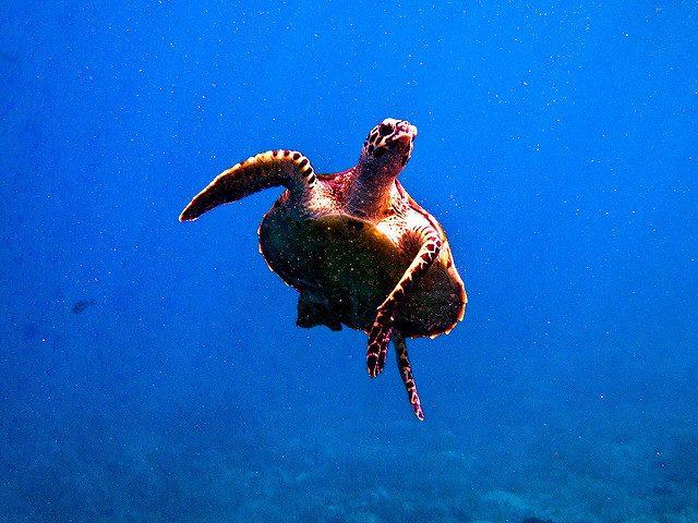 meilleures croisieres plongee sous marine komodo