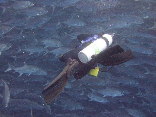 croisiere plongee sous marine ile cocos