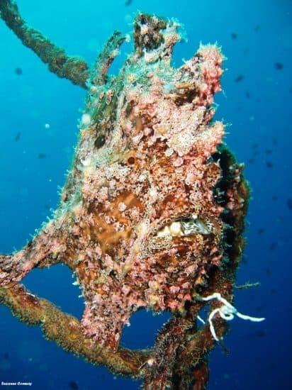 meilleurs sites plongee sous marine aqaba jordanie