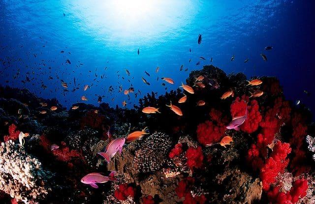 meilleure destination de plongee iles fidji