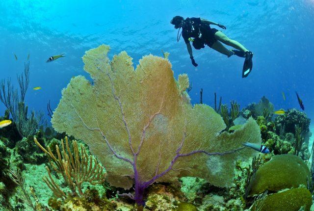 croisiere plongee sous marine coraux plongeur