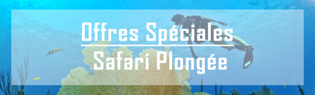 croisiere plongee offre speciales promotions