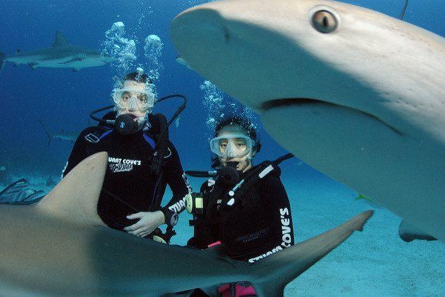 plongée requins bahamas caraibes