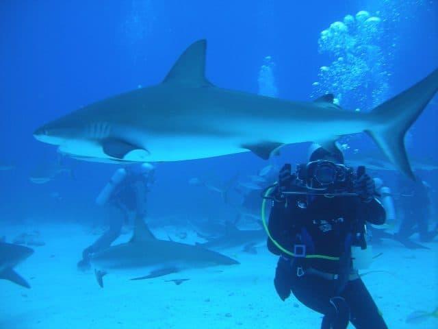 plongee bahamas requin