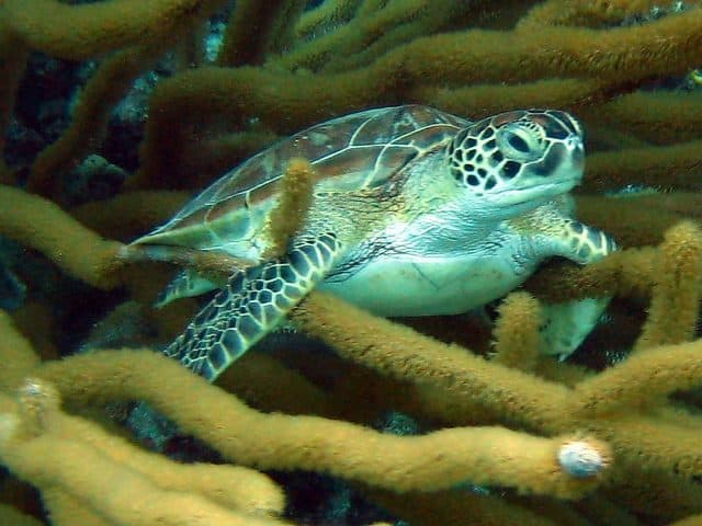 tortue plongee sous marine bonaire abc islands
