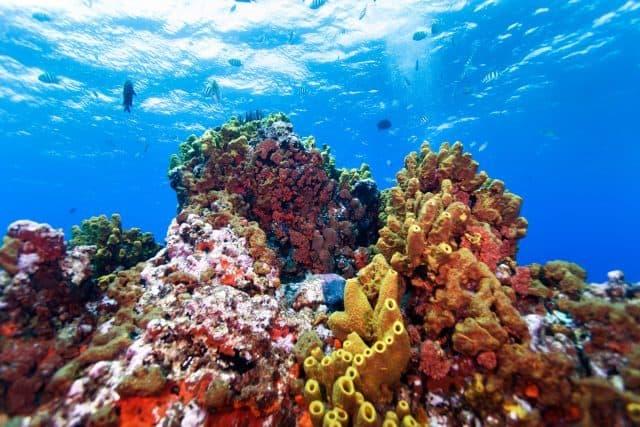 plongee sous marine a saba