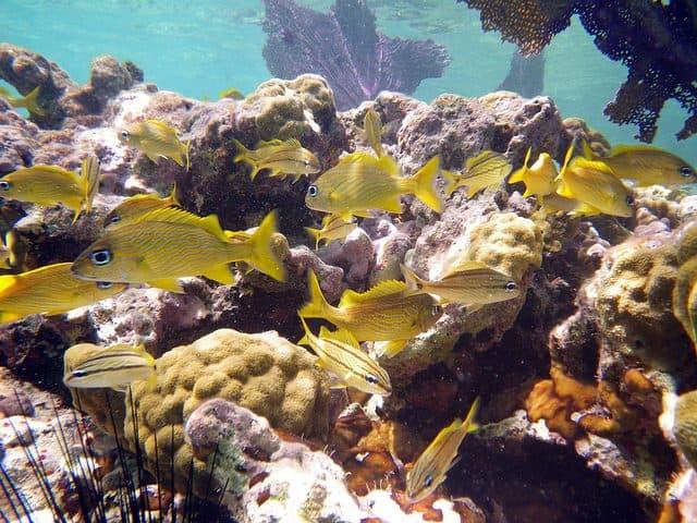 avis sur la plongee aux iles vierges etats unis
