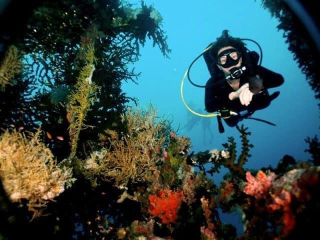 plongee sous marine papouasie