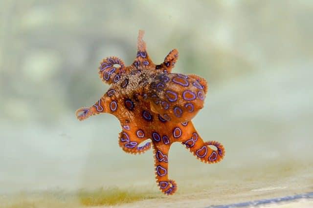 creature dangeureuse plongee sous marine