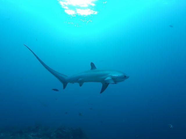 croisiere plongee requin mer rouge egypte