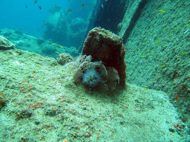avis sur la plongee a aruba