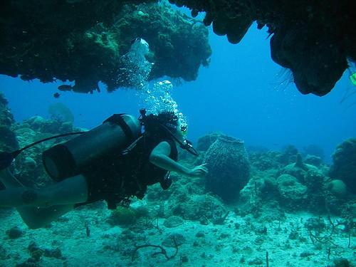avis sur la plongée en jamaique